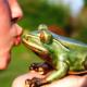kiss.frog