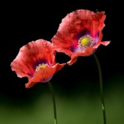 Parforhold er som en blomst. Det skal vandes for at stå stærkt og frodigt.